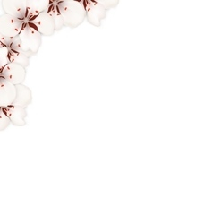 Border Made in Sakura Flowers Blossom vector image vector image