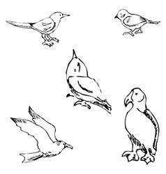 Birds pencil sketch by hand vector