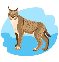 Full length spotted bobcat vector