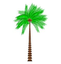 Cocos nucifera vector