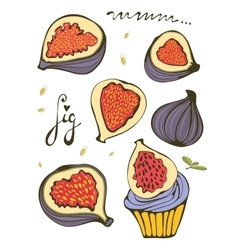 Hand drawn figs vector image vector image