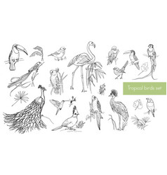 realistic hand drawn contour collection of vector image vector image