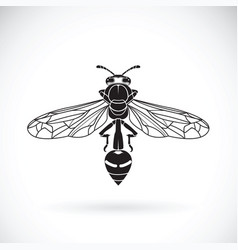 wasp on a white background insect animal vector image