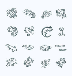 reptiles and amphibians icons set line design vector image