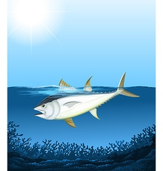 Tuna swimming in the sea vector