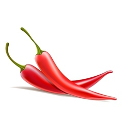 two chili peppers vector image