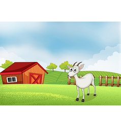 A white goat at the farm vector image vector image