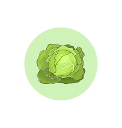 Icon white cabbage vegetable vector
