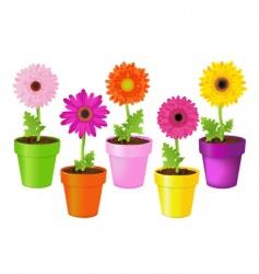 daisies in pots vector image