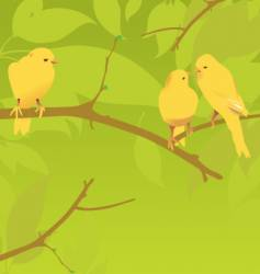 yellow canaries vector image
