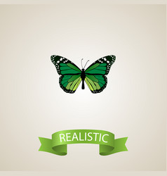 realistic green peacock element vector image vector image