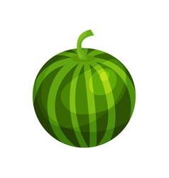 ripe watermelon cartoon vector image