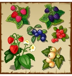 Great berry set mix of six types of berries vector