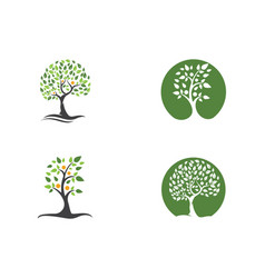 family tree logo template vector image vector image