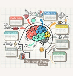 The Human Brain Diagram Doodles Icons Set vector image vector image