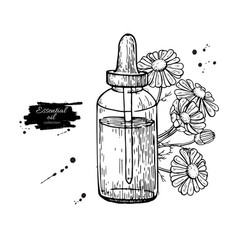 Chamomile essential oil bottle and bunch of vector