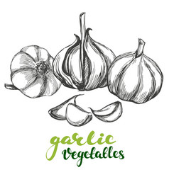 garlicvegetable set hand drawn vector image vector image