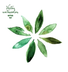 Green watercolor leaves vector