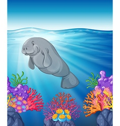 Manatee swimming under the ocean vector