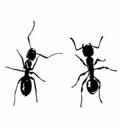Two ants vector