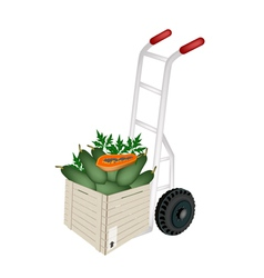A hand truck loading papayas in shipping box vector