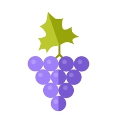 Grape in flat style design vector