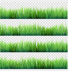 grass isolated on transparent background set vector image