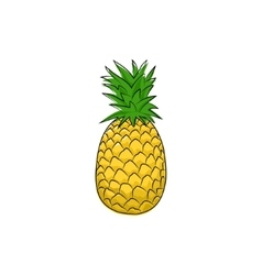 Pineapple isolated on white vector