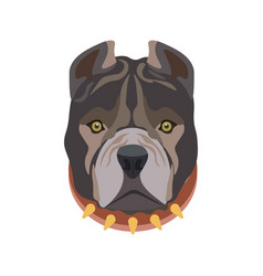 American pit bull breed puppy in dog collar vector
