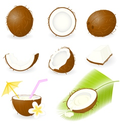 coconut vector image