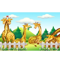 Giraffes in the safari vector image