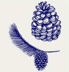 Pine branch with cones vector image vector image
