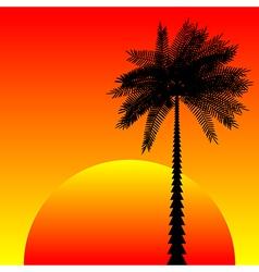 Tropic sunset vector