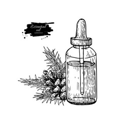 Pine essential oil bottle and fir hand drawn vector
