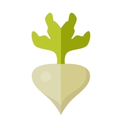 Radishes in flat style design vector