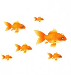 gold fishes vector image