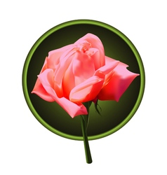 Picture of pink rose vector