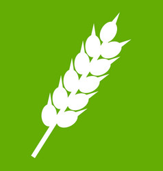 dried wheat ear icon green vector image