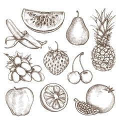 Fruit sketches hand drawing vector image vector image