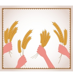 Hands holding fresh wheat vector