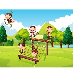 Monkeys playing on climbing station vector image