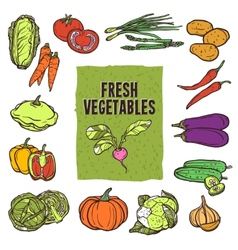 Vegetable sketch set vector