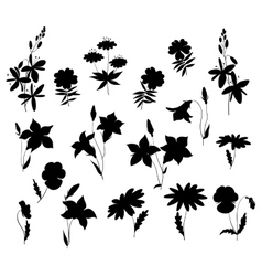 Silhouettes of wild flowers vector image