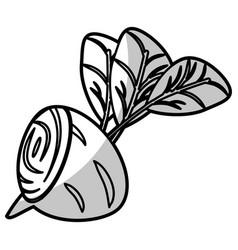 Beetroot half food nutrition - shadow vector