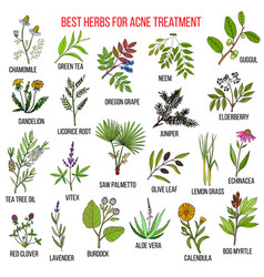 Collection of herbs for acne treatment vector