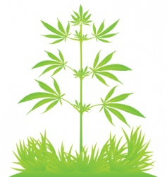 Isolated cannabis plant vector illustration vector