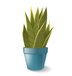 Sansevieria in pot home plant vector
