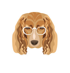 irish setter breed dog in white glasses isolated vector image