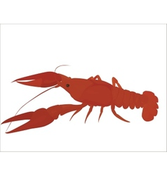 red crayfish vector image