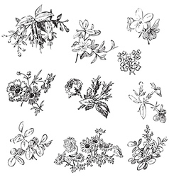 Meadow flower and leaf set isolated on white vector
